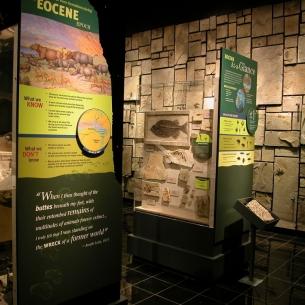 3f-dino-eocene-gallery_medium
