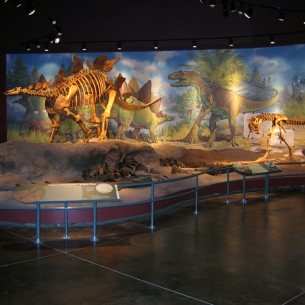 Fossil Journey