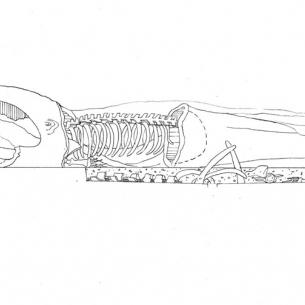 13f-whale-elev