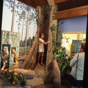 12a-lpzdc-girl-in-tree